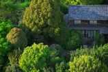 深緑のお屋敷
