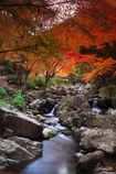 鮮やかな渓流