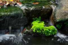 水の色どり