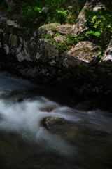 イワツツジの渓谷
