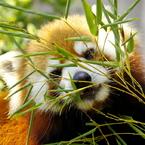 貴方は笹を食し、私は目線を食します