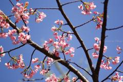 金沢文庫の春