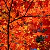 思い出も秋色