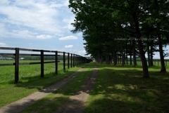 牧場(まきば)の路と青空と