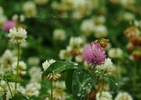 OLYMPUS E-P5で撮影した(雨の日は優しい・・・)の写真(画像)