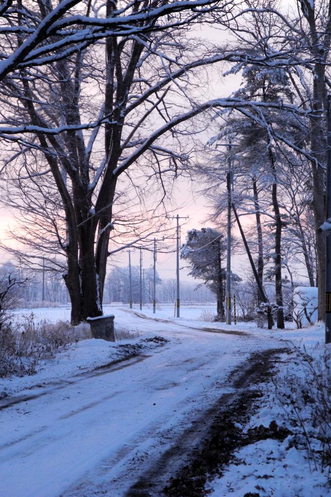 朝と雪と静寂と・・・