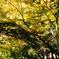 Yokohama 秋の色