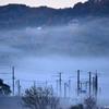 朝霧の中で