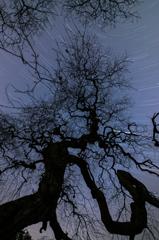 妖樹の下で星空を②