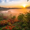 黄金色の湿原①