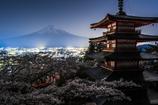 月夜に花見、富士を望む