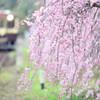 桜咲く鉄路