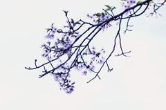 - 儚き春 -