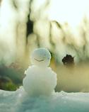 僕の冬休み