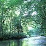 奥入瀬の蒼い森
