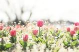 春の入り口