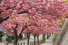 桃色ロード