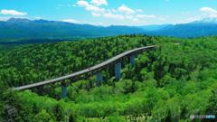 三国峠の新緑