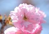 春の日差しを浴びながら