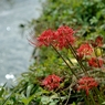 NIKON NIKON D700で撮影した植物(のどかな秋の日)の写真(画像)