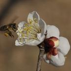 NIKON NIKON D700で撮影した植物(ホバリング)の写真(画像)