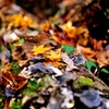 林の中、晩秋の1コマ