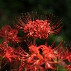 NIKON NIKON D700で撮影した植物(秋の訪れ)の写真(画像)