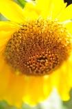 溶けてゆく黄色