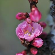 NIKON NIKON D700で撮影した植物(蕾に囲まれて)の写真(画像)