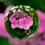 宙玉レンズ18〜紫陽花 ピンク