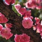 NIKON NIKON D700で撮影した植物(満開)の写真(画像)