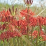 NIKON NIKON D700で撮影した植物(やわらかな秋の日差しを浴びる)の写真(画像)