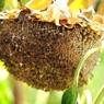 NIKON NIKON D5000で撮影した植物(種をまく為)の写真(画像)