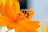 働くミツバチその2