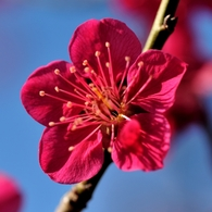 NIKON NIKON D700で撮影した植物(鮮やかな赤)の写真(画像)
