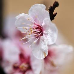 NIKON NIKON D700で撮影した植物(白梅)の写真(画像)