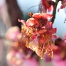 NIKON NIKON D700で撮影した植物(夢の終わり)の写真(画像)