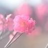 NIKON NIKON D700で撮影した植物(夢の中)の写真(画像)