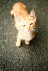 通りすがりのネコ