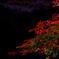 明月院 紅葉