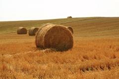 小麦ロール