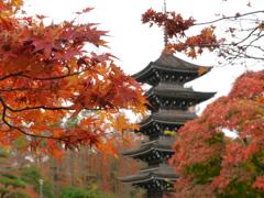 晩秋の西方寺五重塔