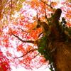 燃ゆる秋Ⅴ