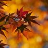 深まる秋Ⅲ