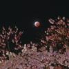月食花見Ⅱ
