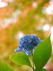 鹽竈神社の紫陽花