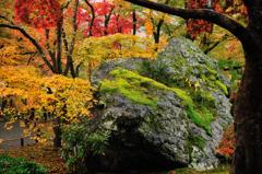 岩のパレット