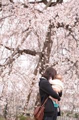 初めての桜