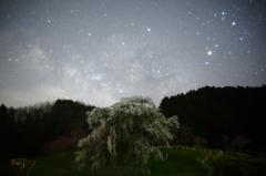 天の川と又兵衛桜