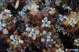 雑草の結晶